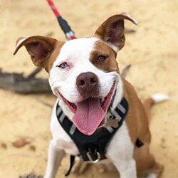 Chiropractic Durham NC Therapy Dog Shasta